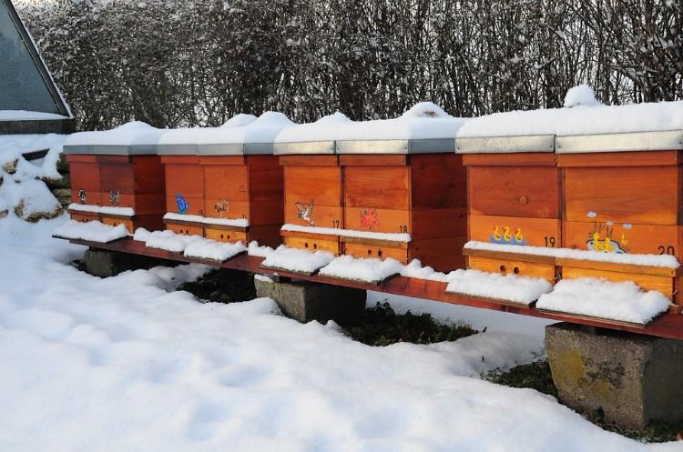 Пчелиная пасека зимой